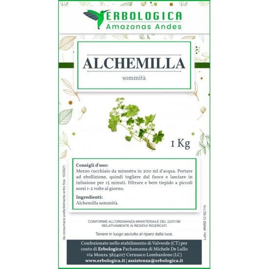 Alchemilla pianta taglio tisana 500 grammi