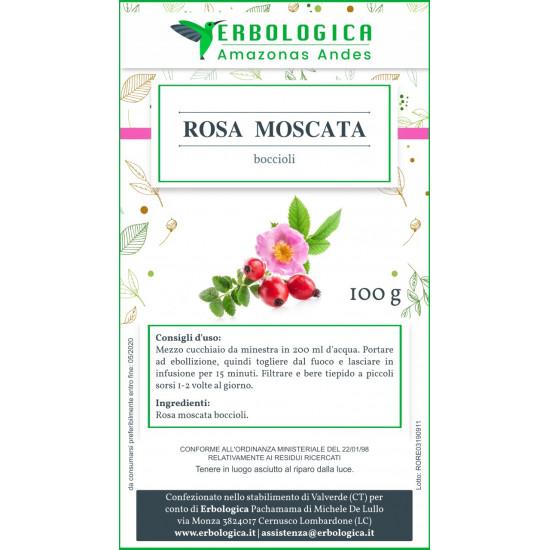 Rosa moscata boccioli 500 grammi